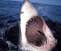 Haai eet je op