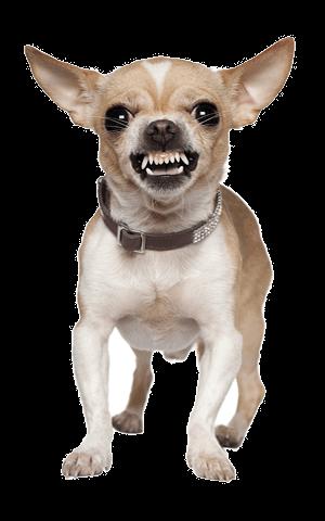 blaffende-hond-verhaal