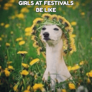Festival meiden